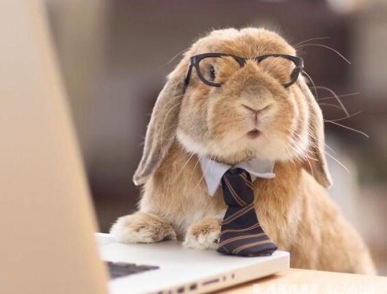 """制服兔子造型多变似型男 众人热捧成""""网红"""""""