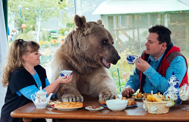 俄罗斯夫妇收养一个熊儿子