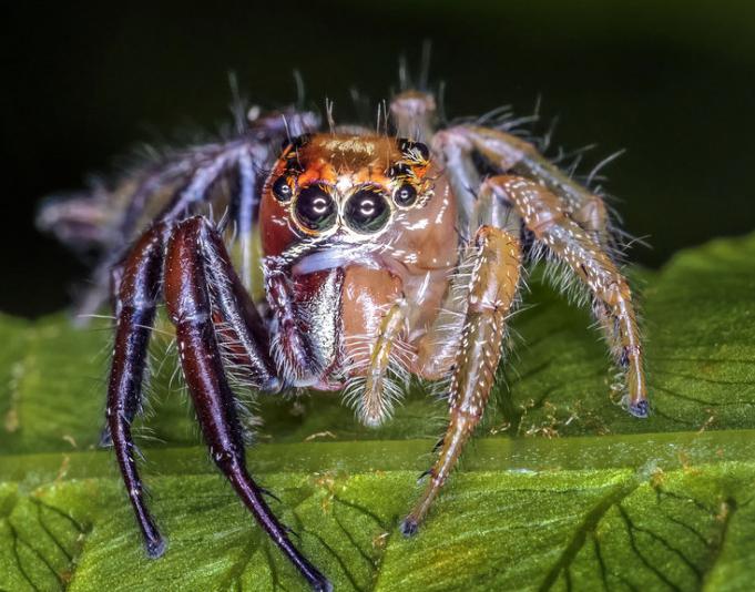 美公园出现雌雄同体蜘蛛 公母各占身体一半