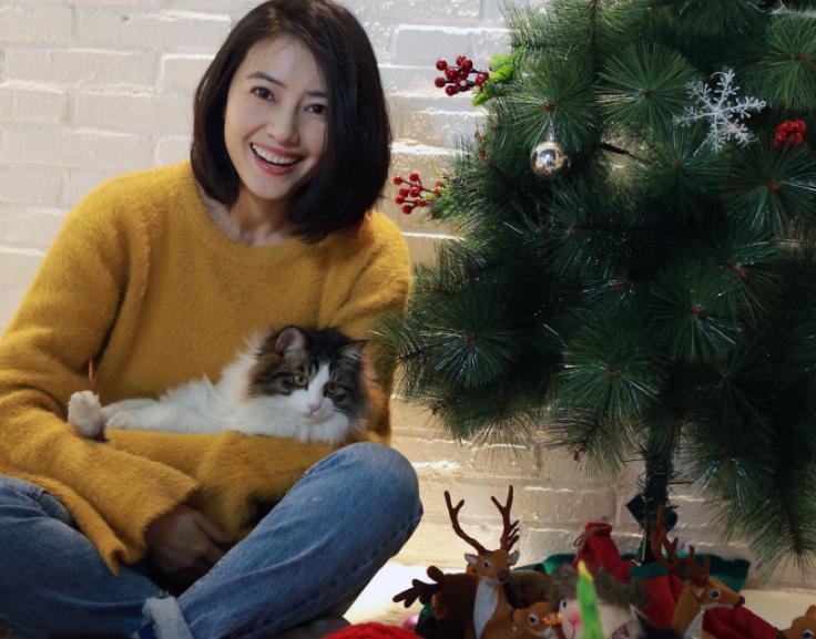 高圆圆抱猫咪拍圣诞写真 穿成交通灯笑容甜美