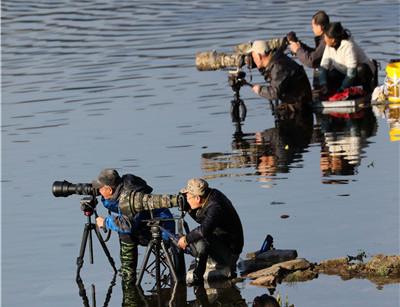婺源惊现迁徙鸳鸯吸引各地摄影爱好者前来拍摄