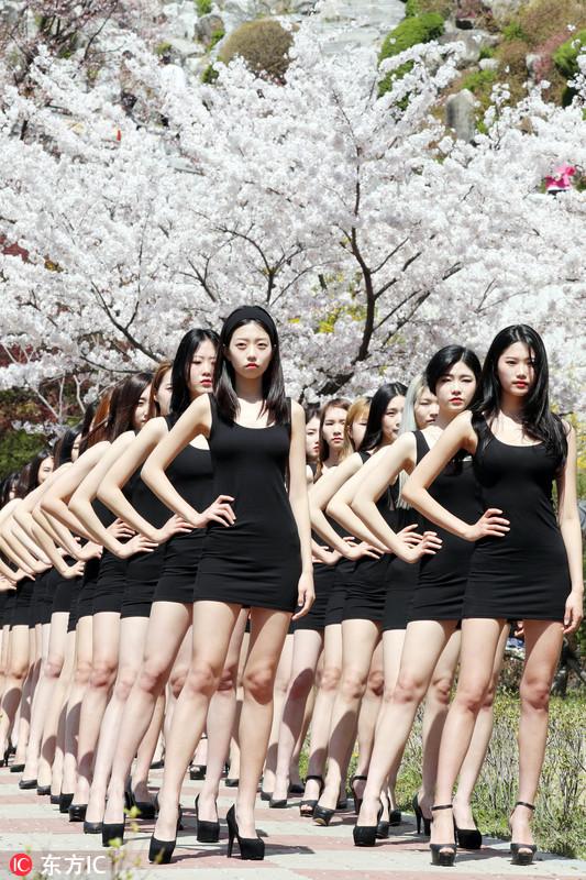 韩国女大学生樱树下走秀 自带气场