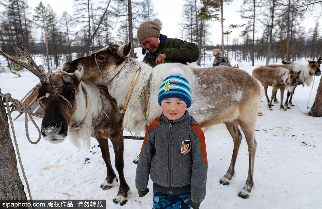 探访俄罗斯鹿饲养场 农场主以鹿为生幸福生活