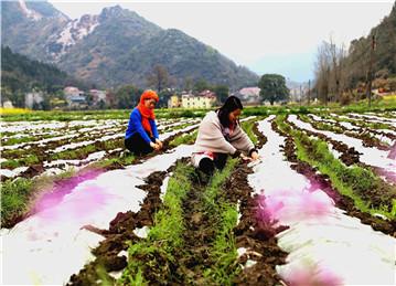发展特色种植业