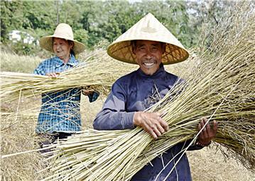 鄱阳县村民们抢收油菜籽