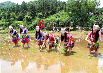泉谷湾基地举行传统插秧节活动