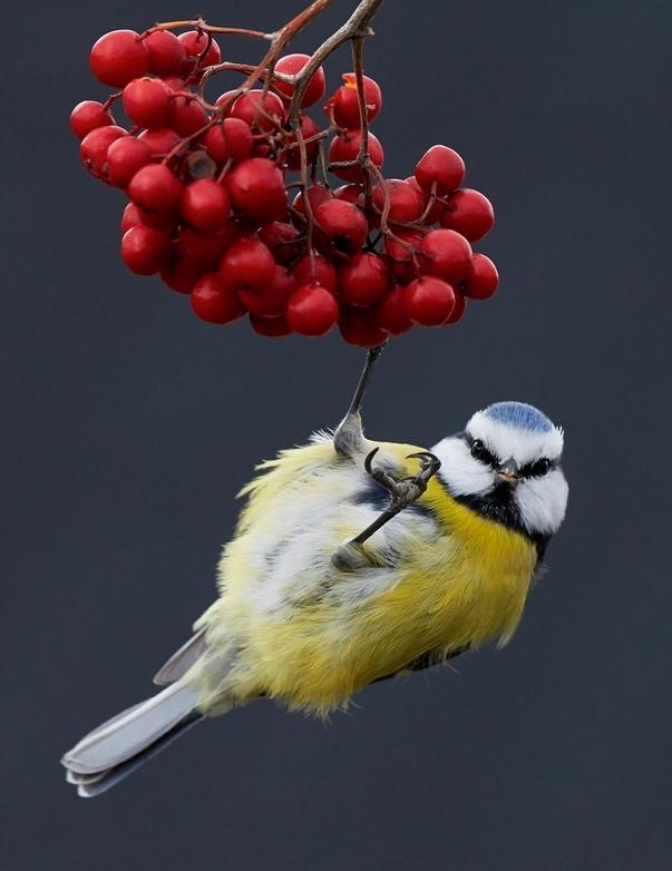 英鸟类摄影大赛定格精彩瞬间 震撼至极