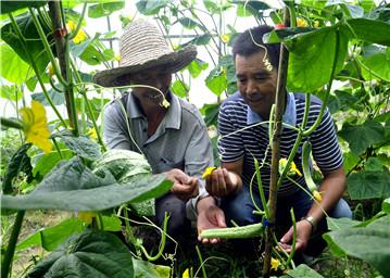 指导菜农生产