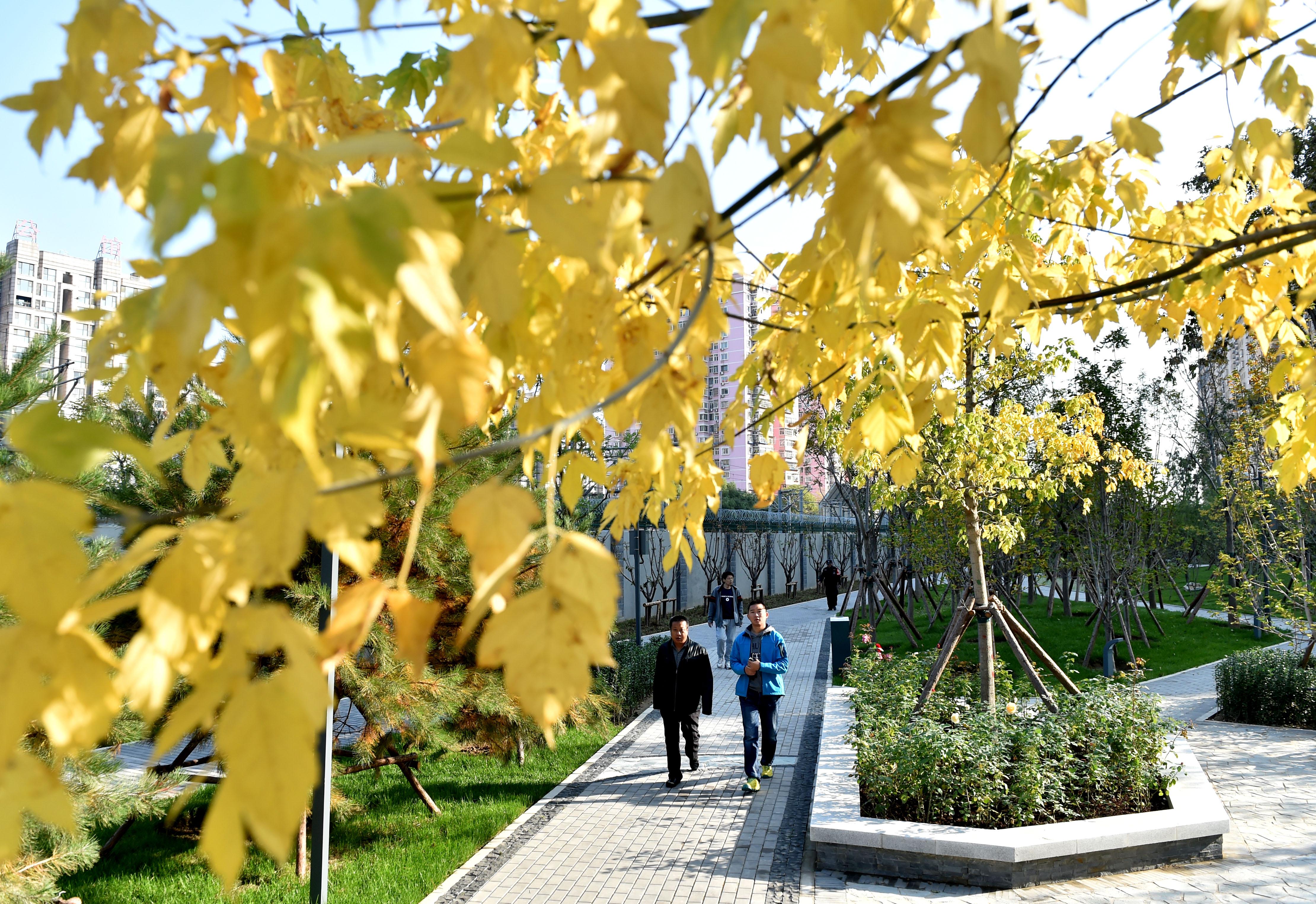 居民楼前闲置地变身城市休闲公园