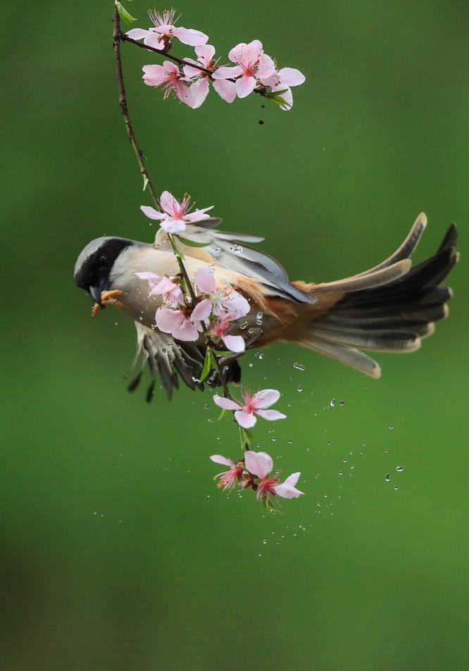 小鸟花间舞