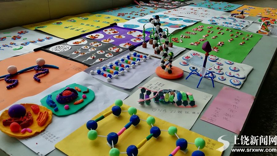 寓乐于教  融趣于学  ——上饶县二中开展生物模型制作比赛活动