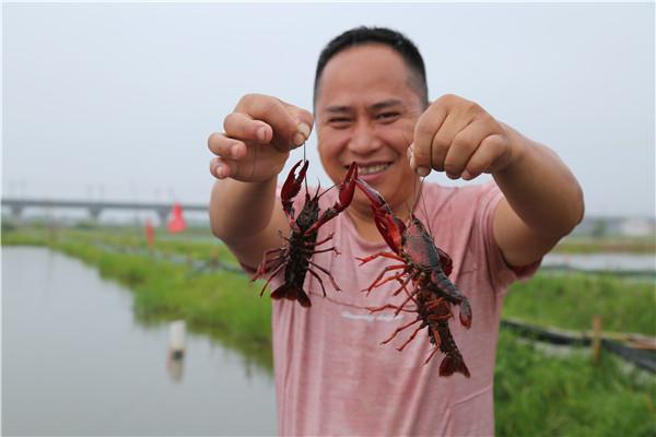 养龙虾 助脱贫