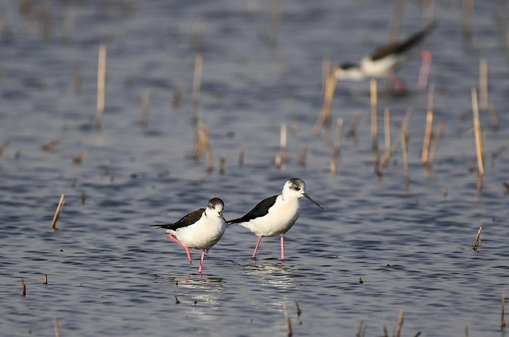 我国湿地面积8亿亩 位居世界第四
