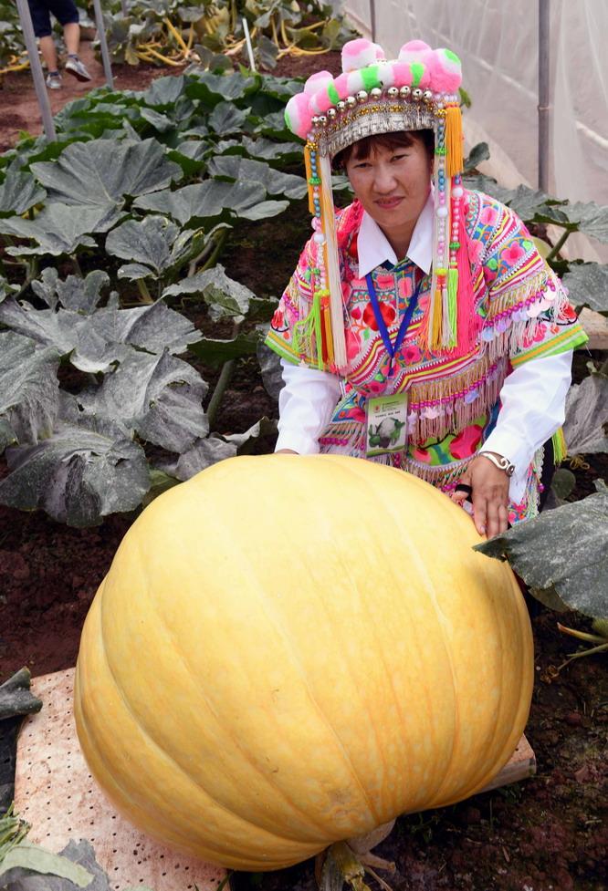 中国云南蔬菜种业博览会在武定举行