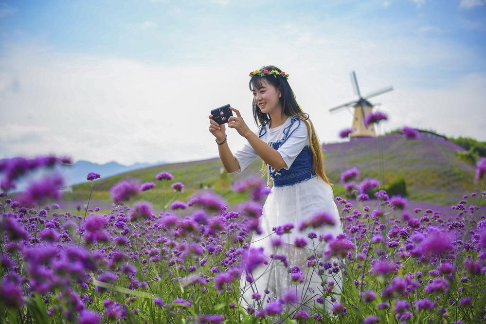 贵州桐梓:紫色花海醉游人