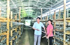 菌菇种植合作社