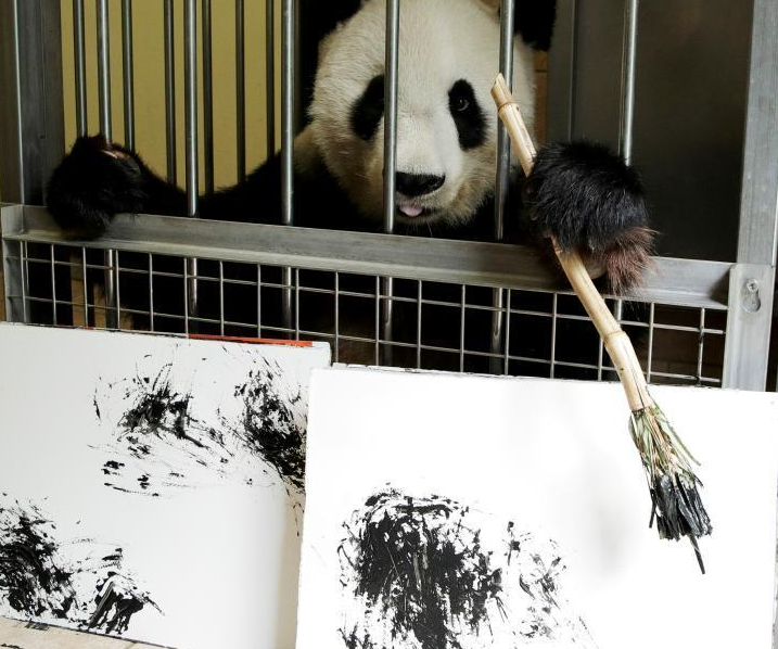 """奥地利动物园内 大熊猫""""挥毫作画"""""""