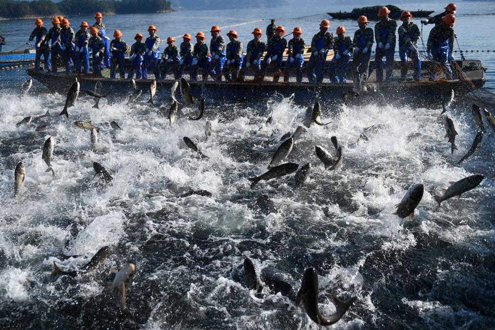 巨网捕鱼 场面壮观