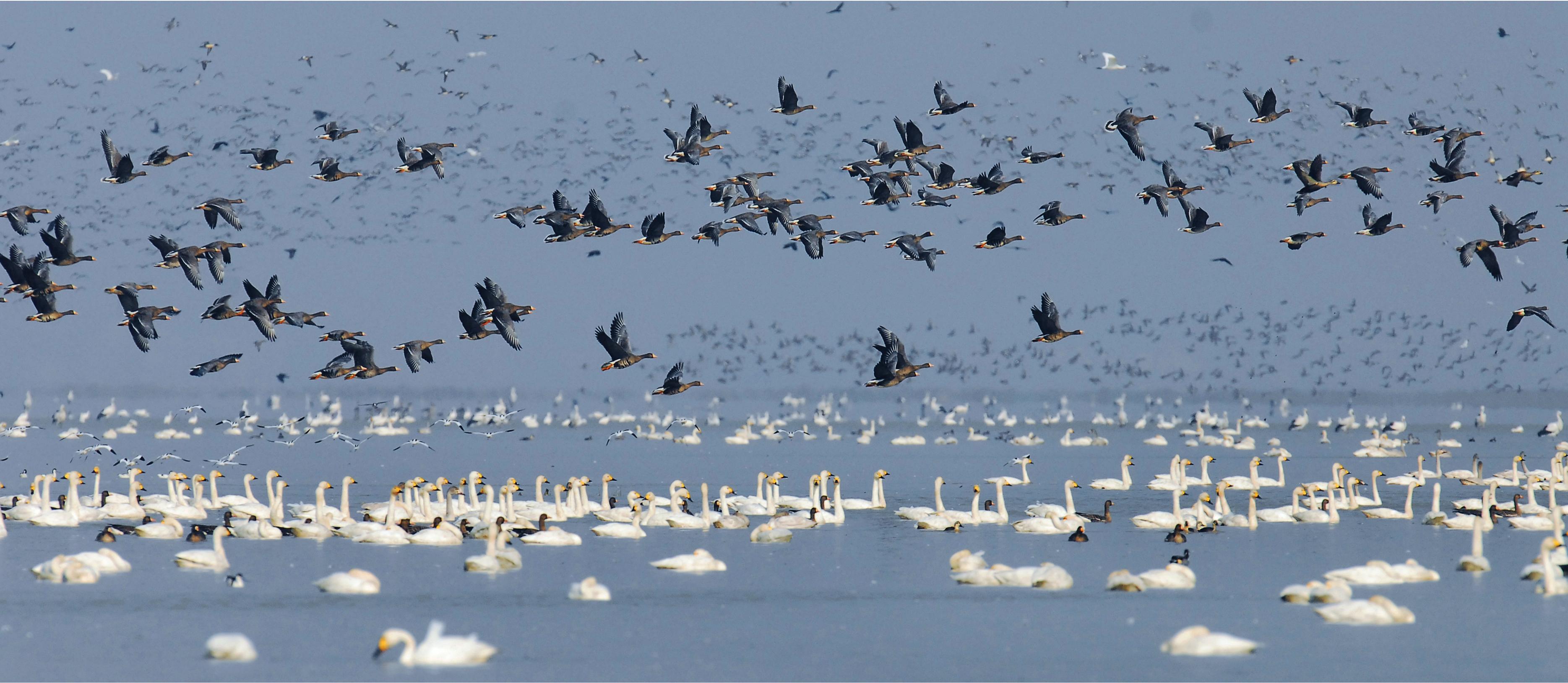一切为了山绿鸟欢水清鱼跃