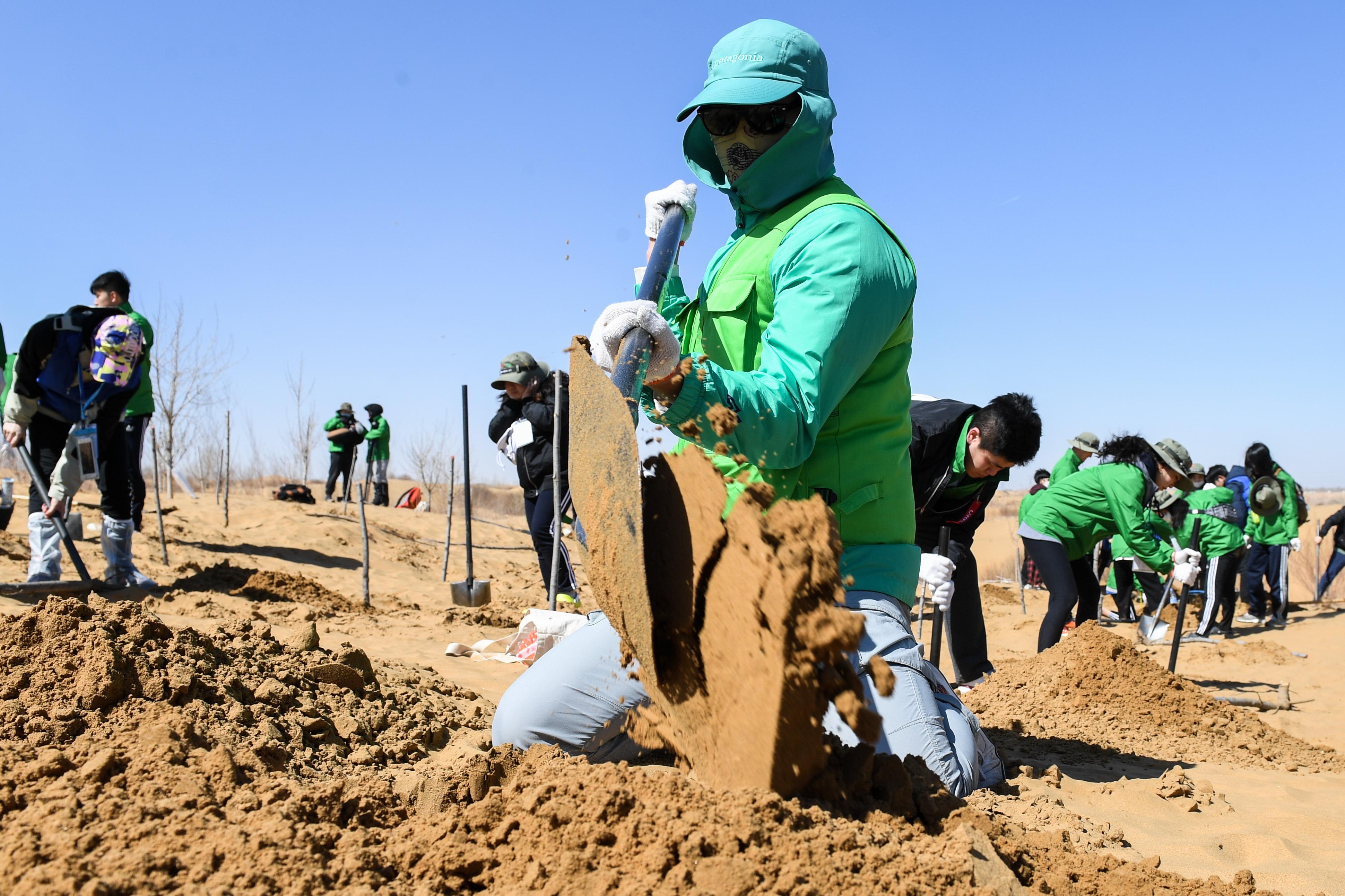 中韩青年在内蒙古库布其沙漠植绿