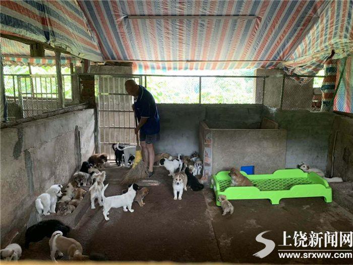 我市设立流浪犬收容基地 符合条件的人可领养