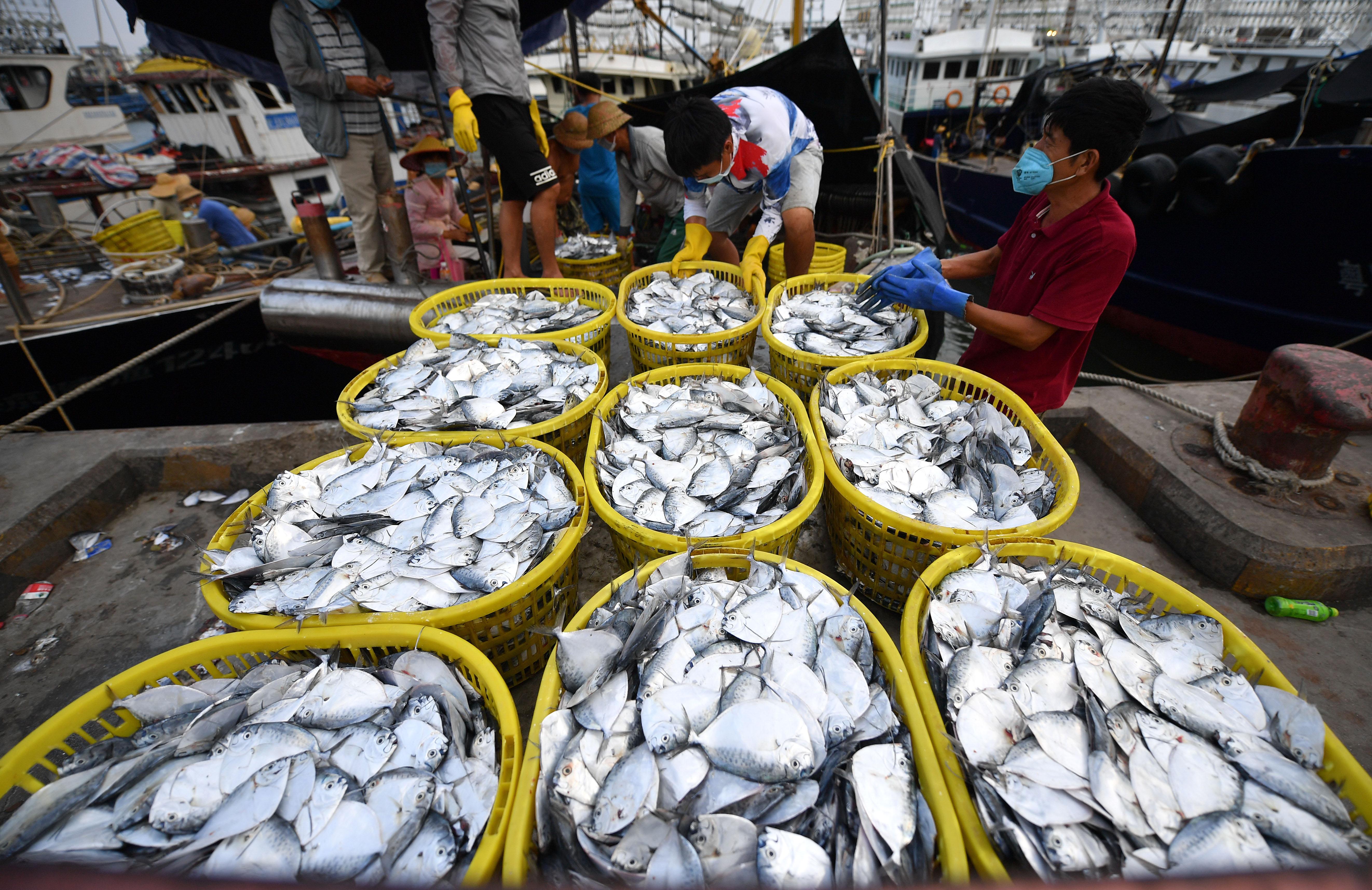 海南:耕海归来鱼满仓