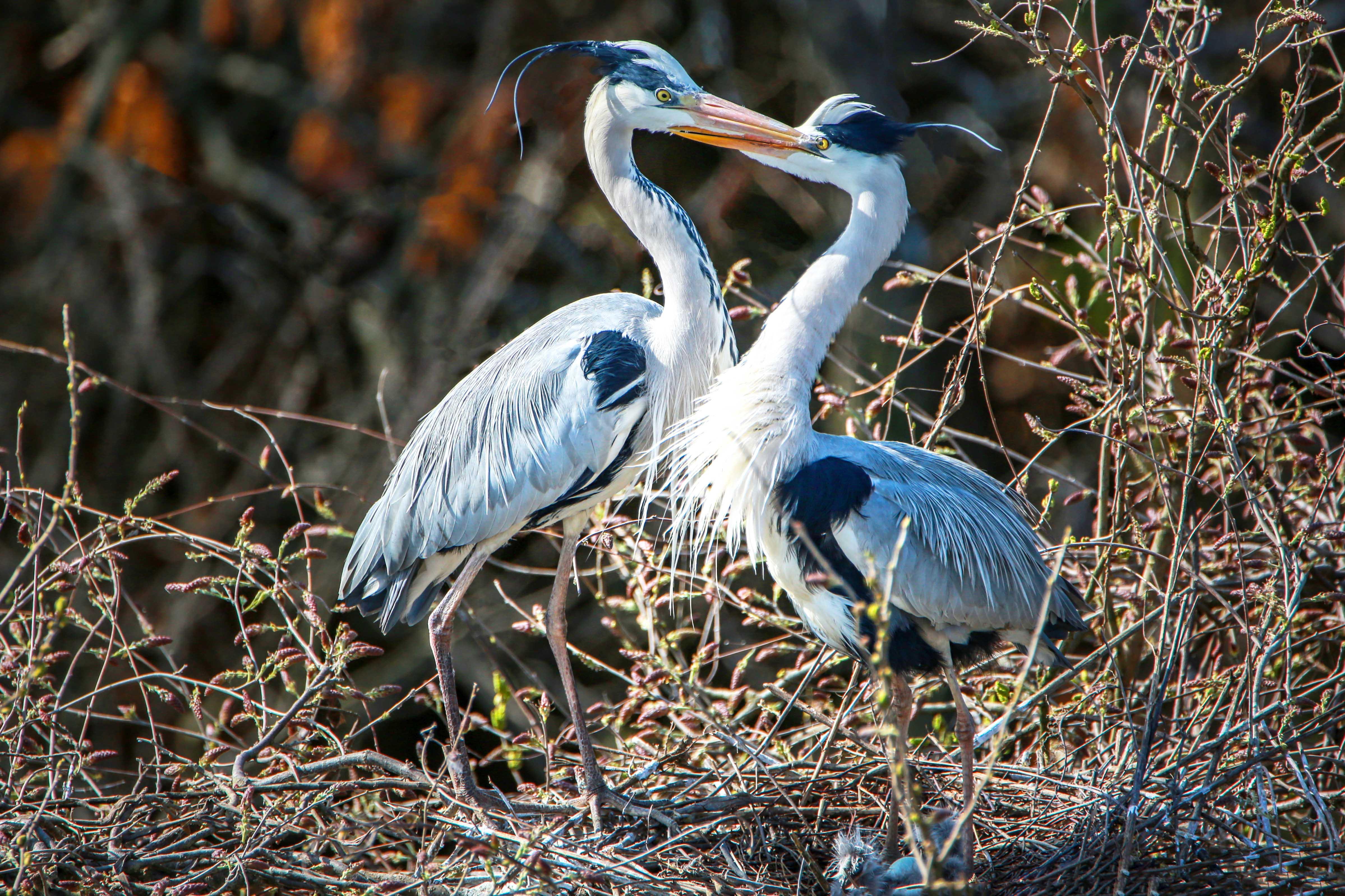 鄱阳湖区迎来夏候鸟