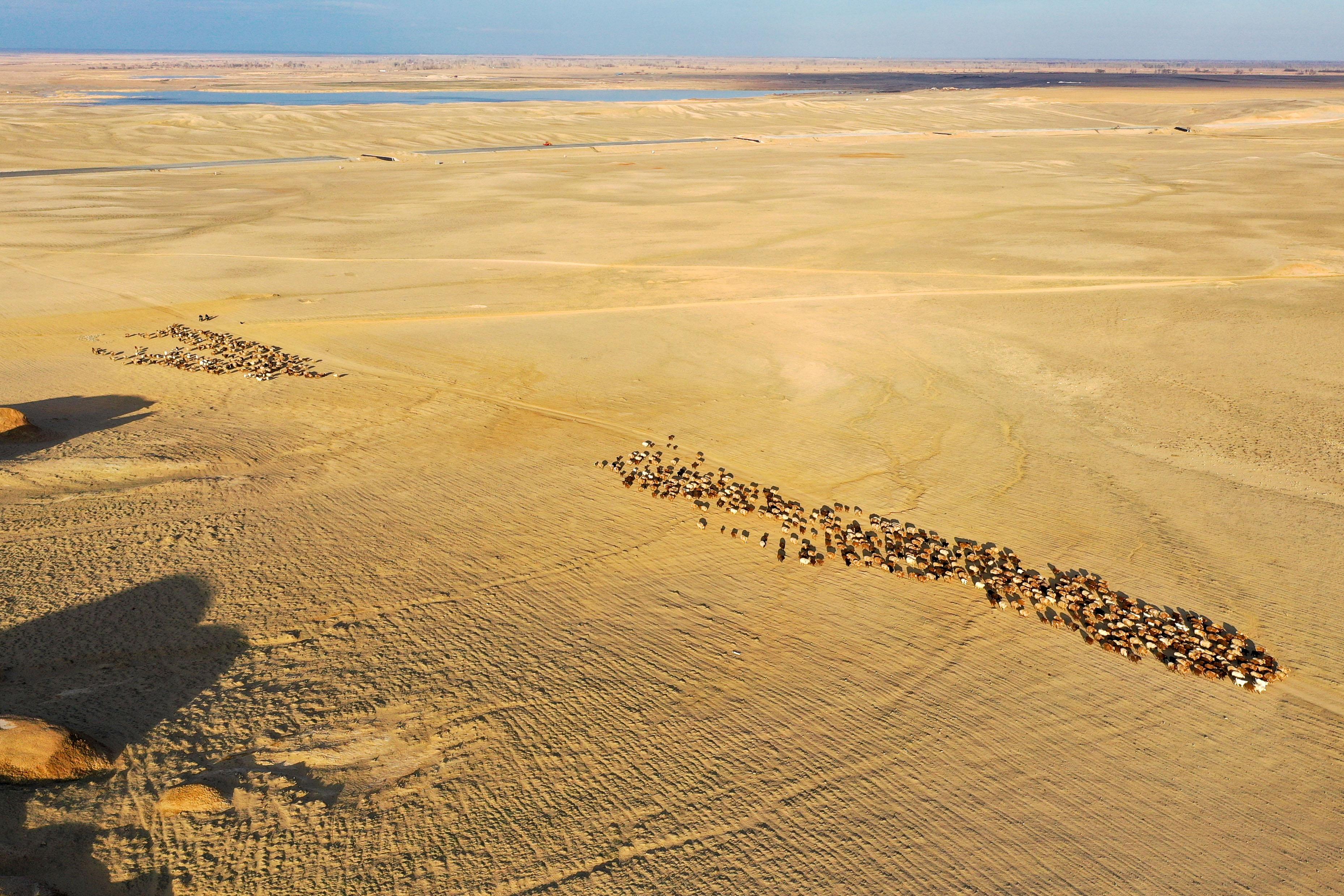 向春天进发——新疆福海县牧民迎来转场季