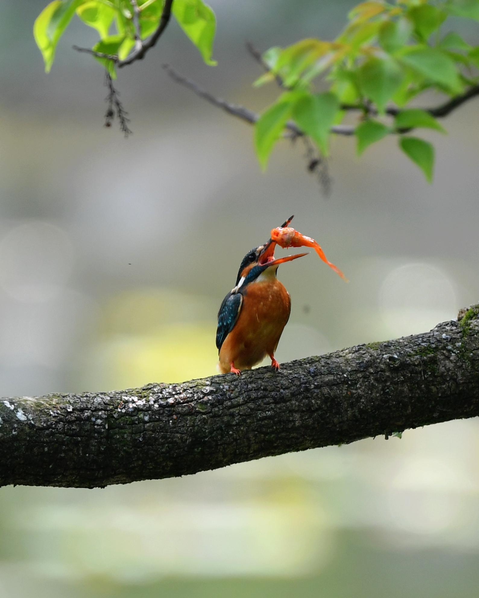 春逢谷雨鸟翩跹