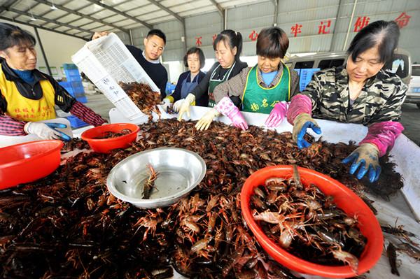 小龙虾带出大产业