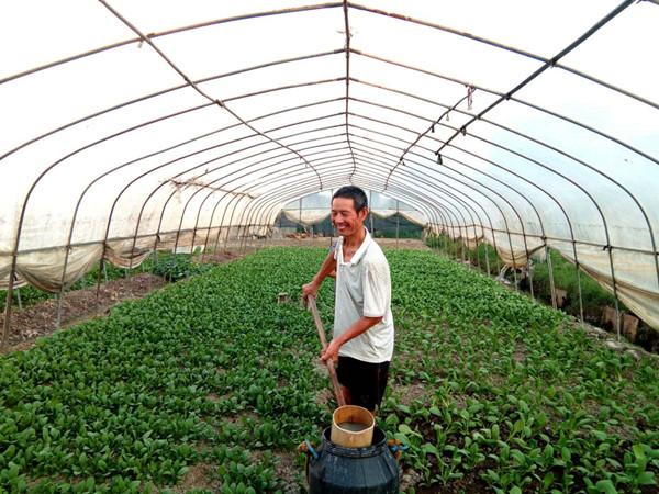 大棚菜 家肥种