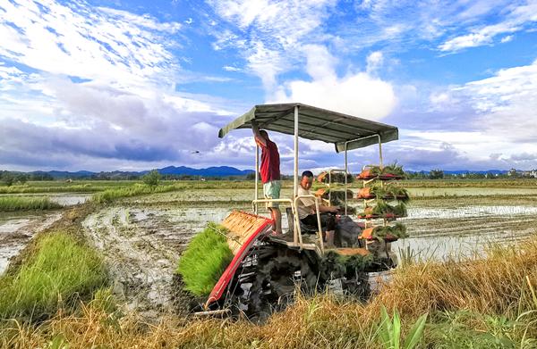 洪水退到哪,晚稻就栽到哪!