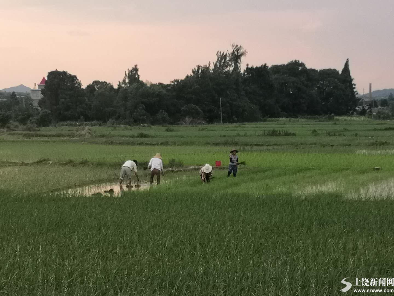 奋战洪灾和灾后重建第一线的老支书陈东海