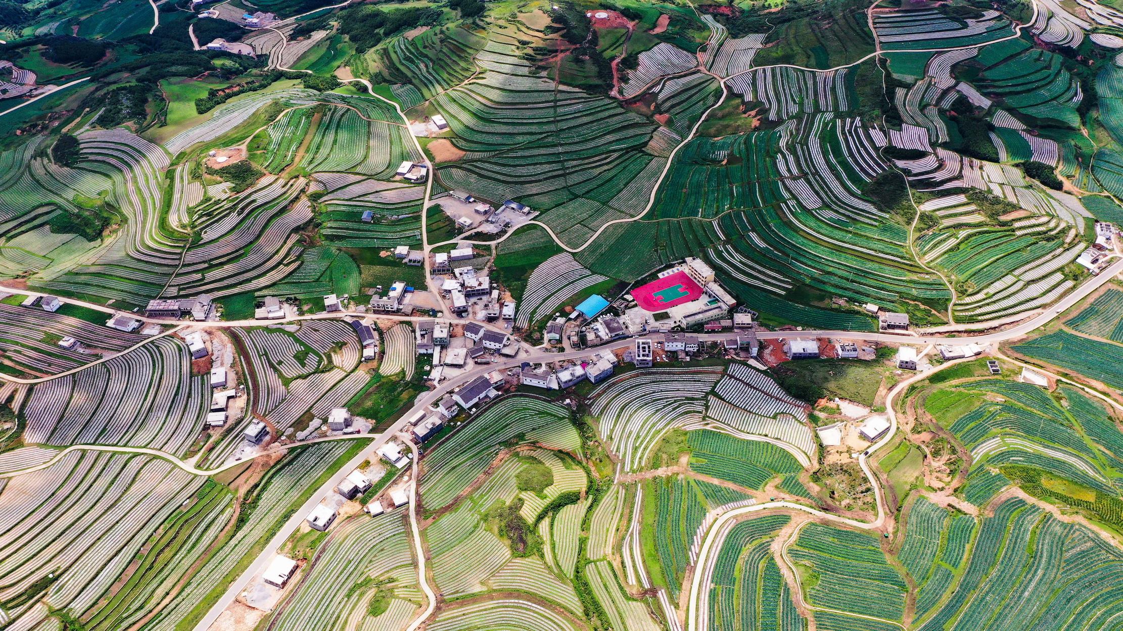 """贵州威宁:高原""""冷凉蔬菜""""产业助农脱贫"""