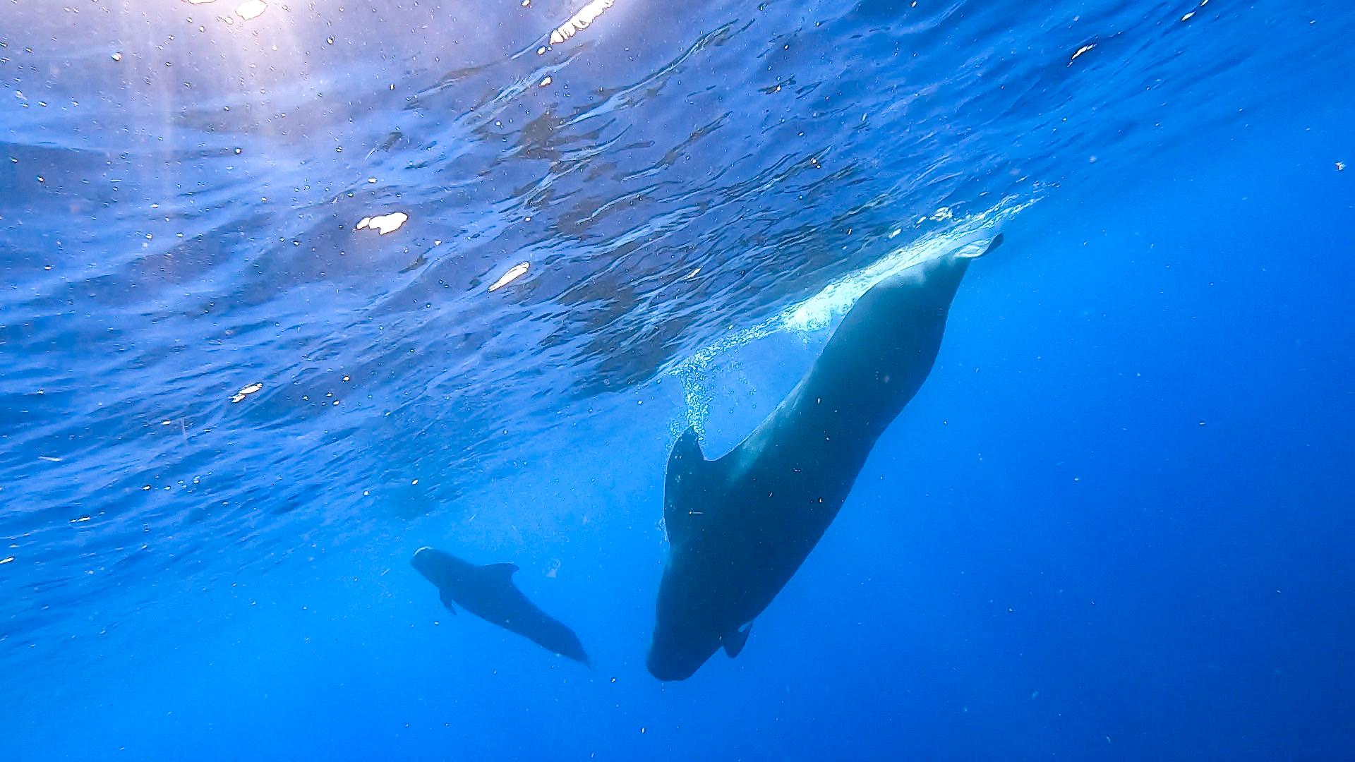 我国科研人员在南海记录到抹香鲸等11个鲸类物种
