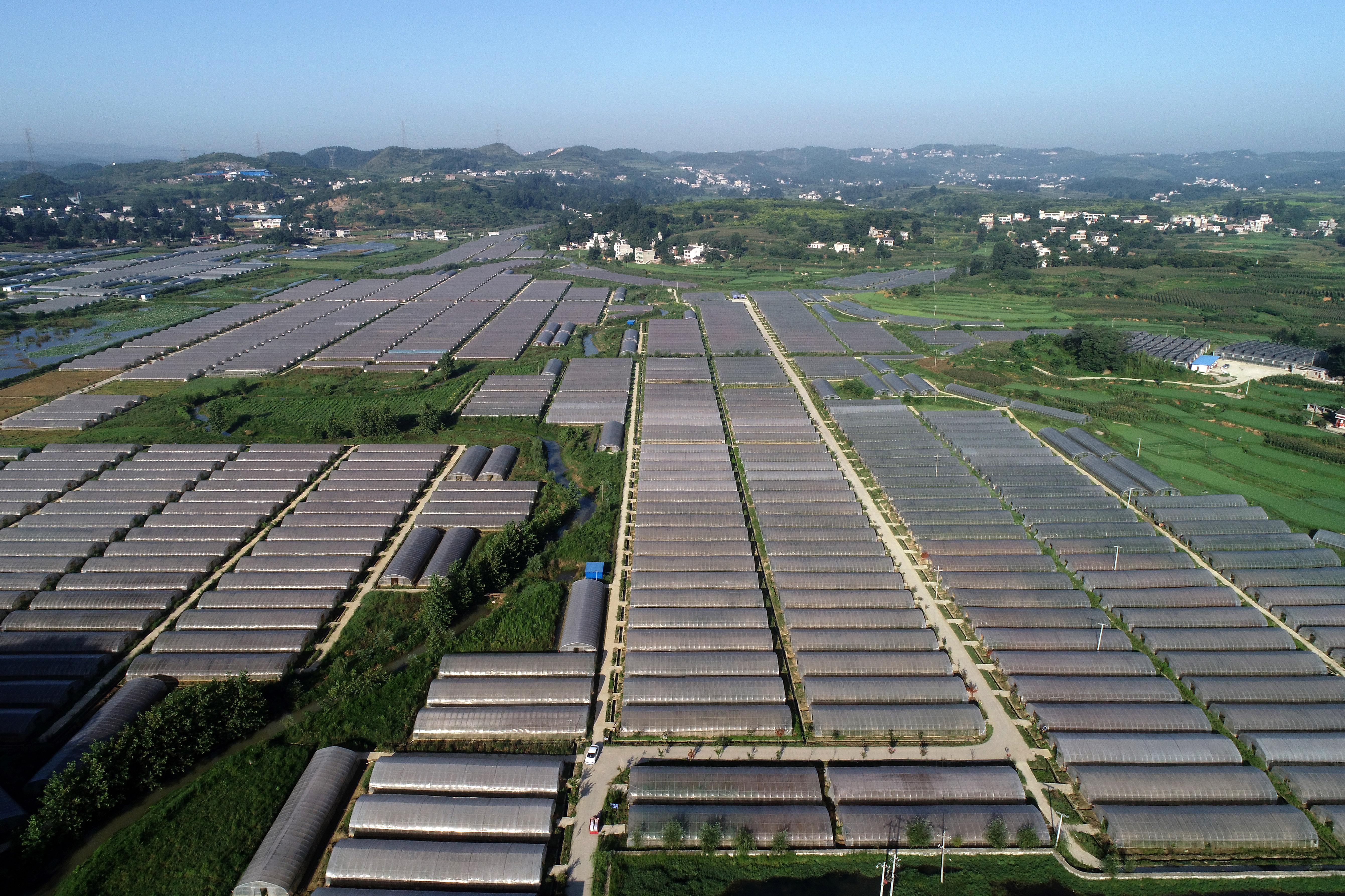 贵州黔西:规模化发展经济作物 提升坝区农业效益