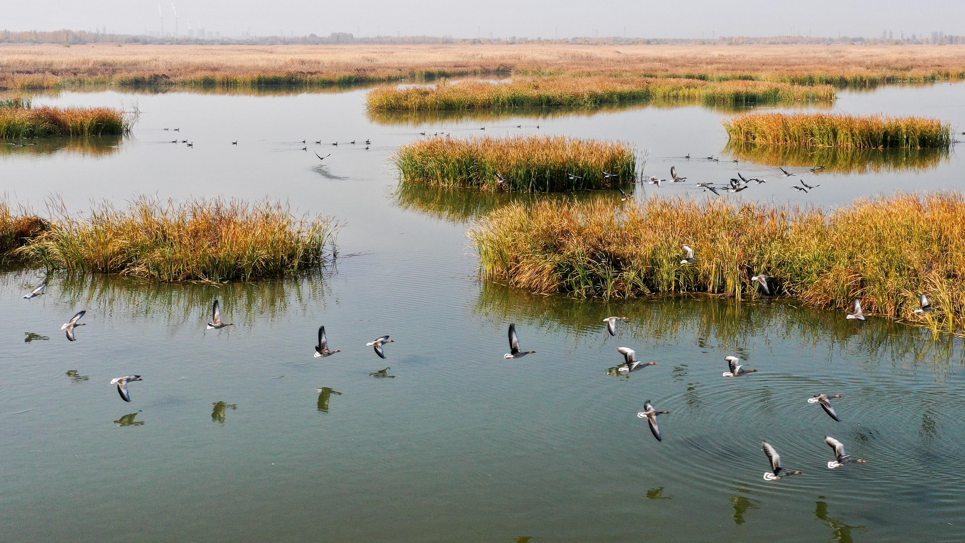 新疆玛纳斯:秋日湿地画卷