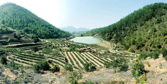 """广信区良兴林业专业合作社:""""三变""""突破  穷山终成鱼米乡"""