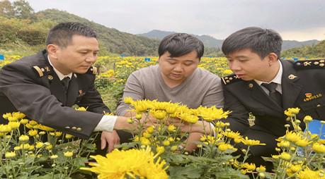 为皇菊走向海外助力