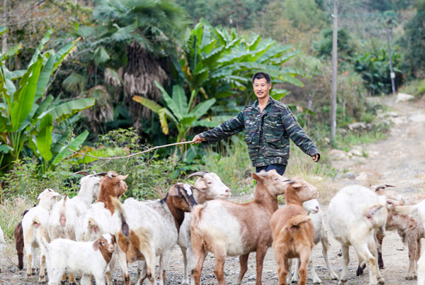 放养扶贫羊