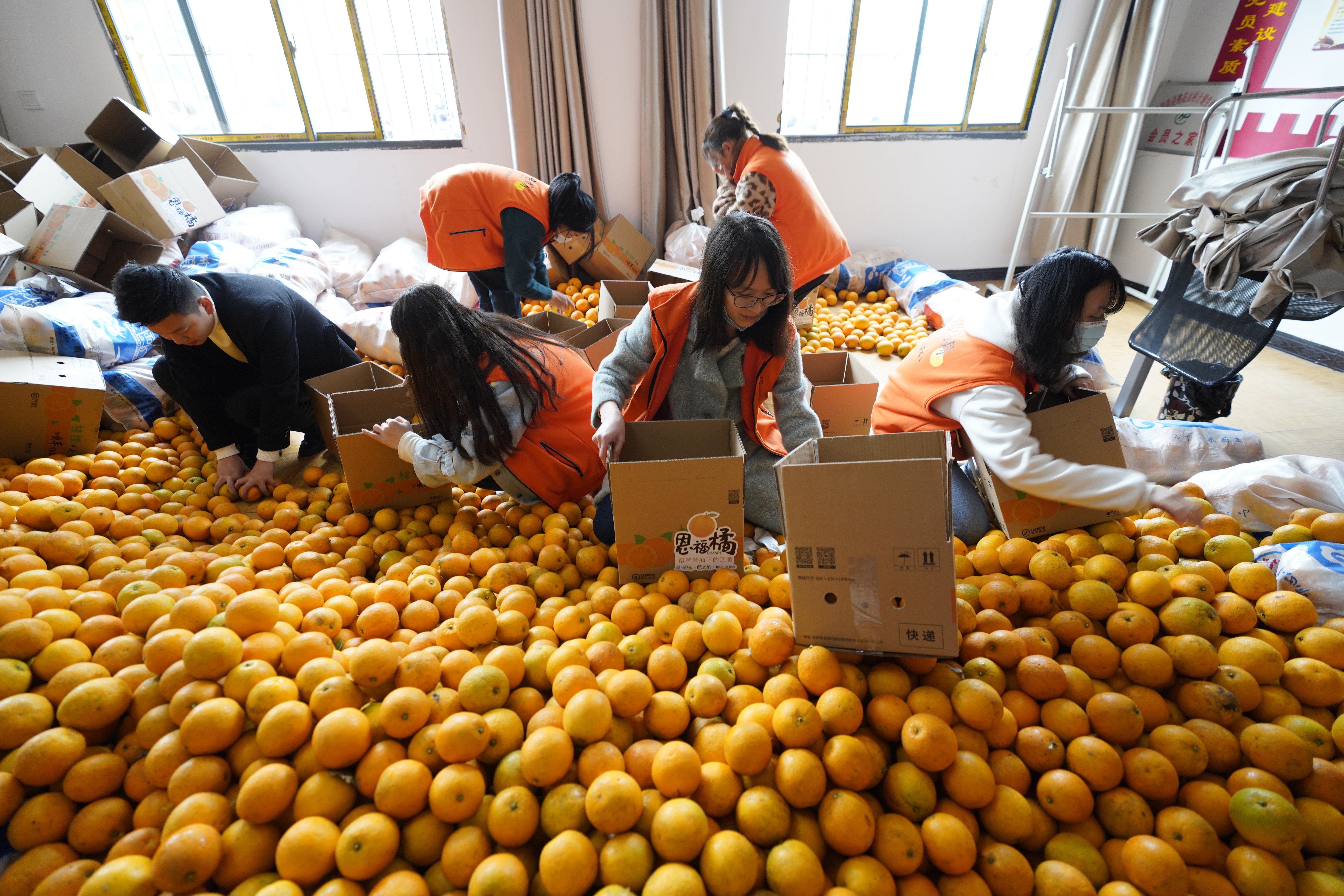 公益助农缓解柑橘采摘销售难