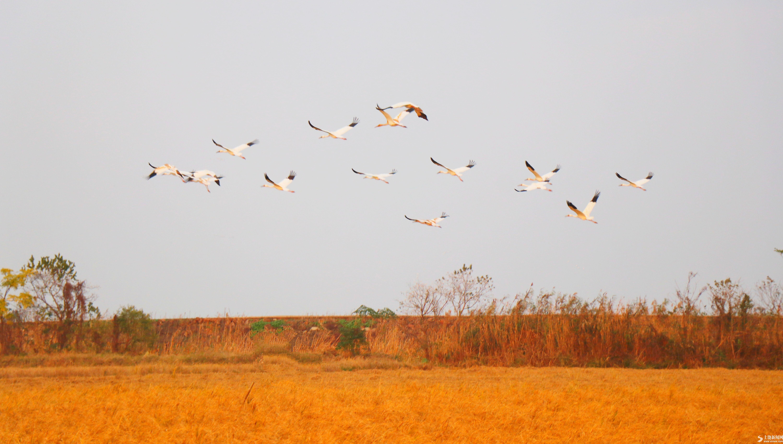 飞鸟翔 生态美