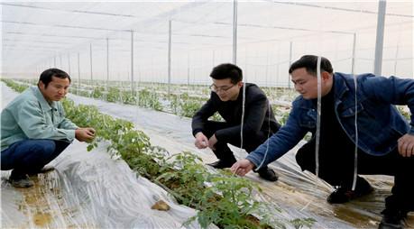 做好农作物防寒防冻措施
