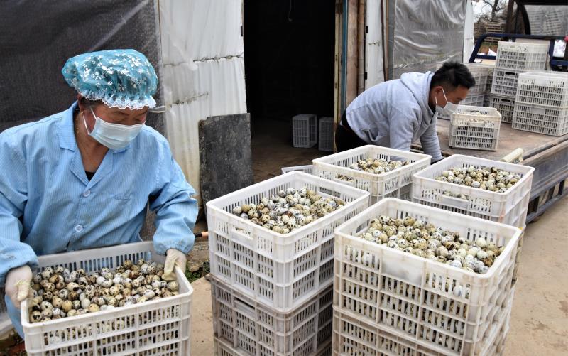 产业化养殖