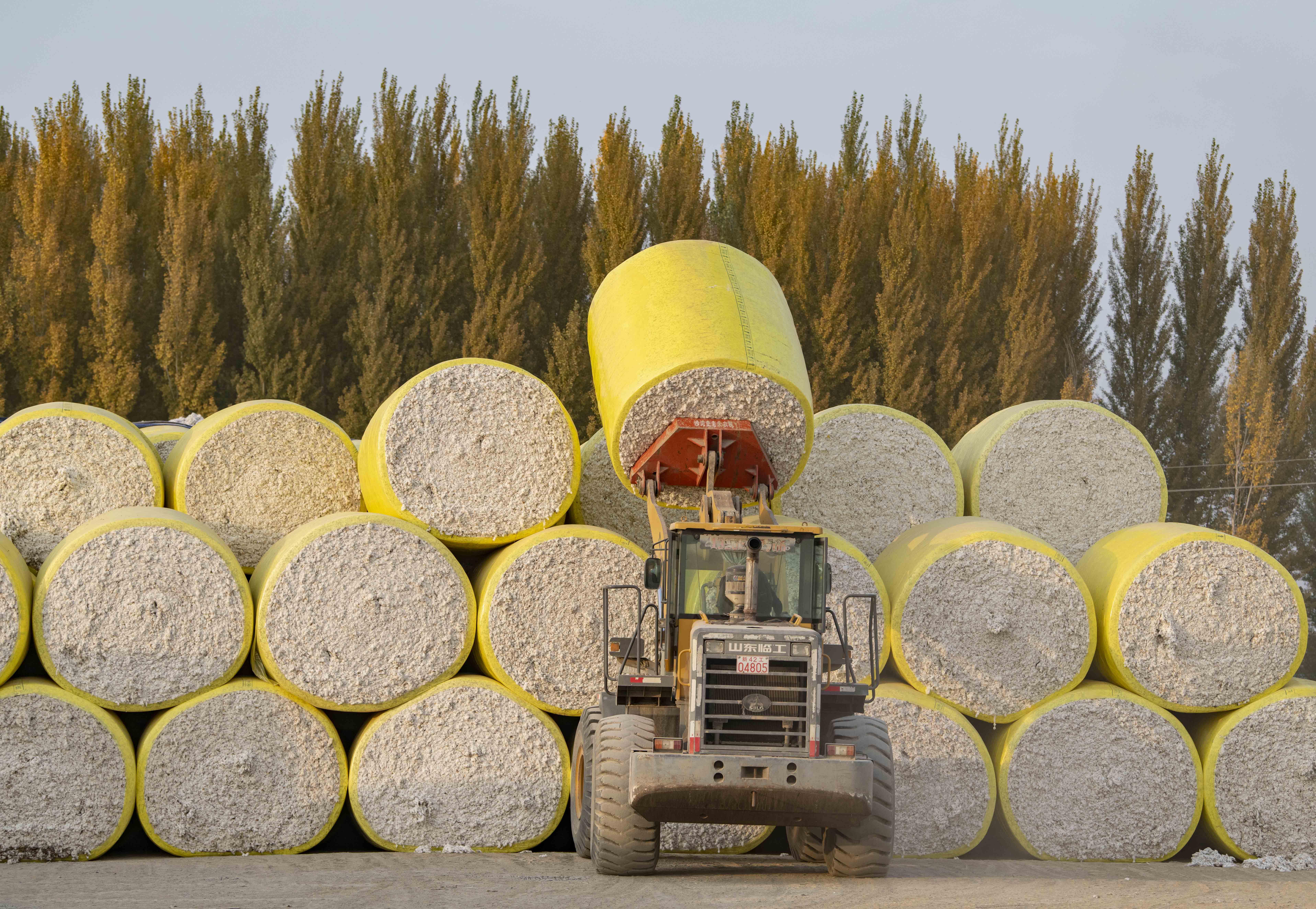 新疆棉花收购忙